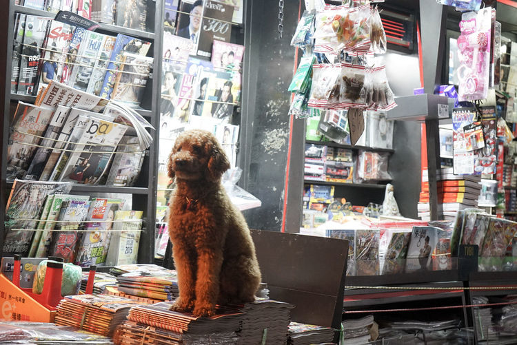 When I first saw this dog I thought it was a toy. But then he started to read to me from his favourite magazine. Intelligent Intellectual Dog Love Dog Animalsrights Cute Pets Petstagram Doglover Fluffy Domestic Animals Books