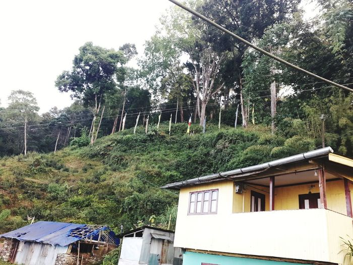 Low angle view of house amidst trees and plants in forest