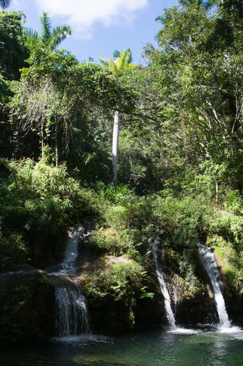 Alturas de Banao Alturas De Banao Beauty In Nature Cuba Cuba Collection Day Flora Flowers Freshness Green Color Growth Motion Nature No People Outdoors Reflection Scenics Sky Splashing Spraying Tourist Destination Travelling Photography Tree Water Waterfall