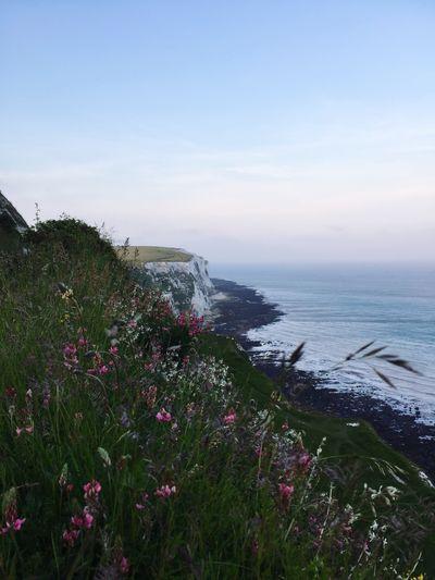 White Cliffs Of Dover Coastline United Kingdom Flowers Seaside Landscape