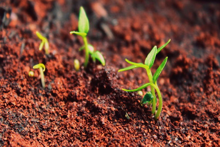 Botany Grass Fresh Light Leaves Leaf Vein Nature Springtime Spring New Life New Life Begins New Life & New Hope Leaf Close-up Plant Blade Of Grass Soil Seedling Young Plant Sapling Planting Growing Vegetable Garden Horticulture