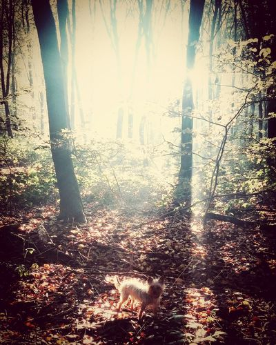My Yorkie  Countryside England Dogwalking A Walk In The Woods Exploring Woods