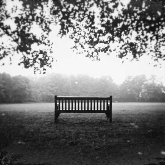Empty bench in front of trees