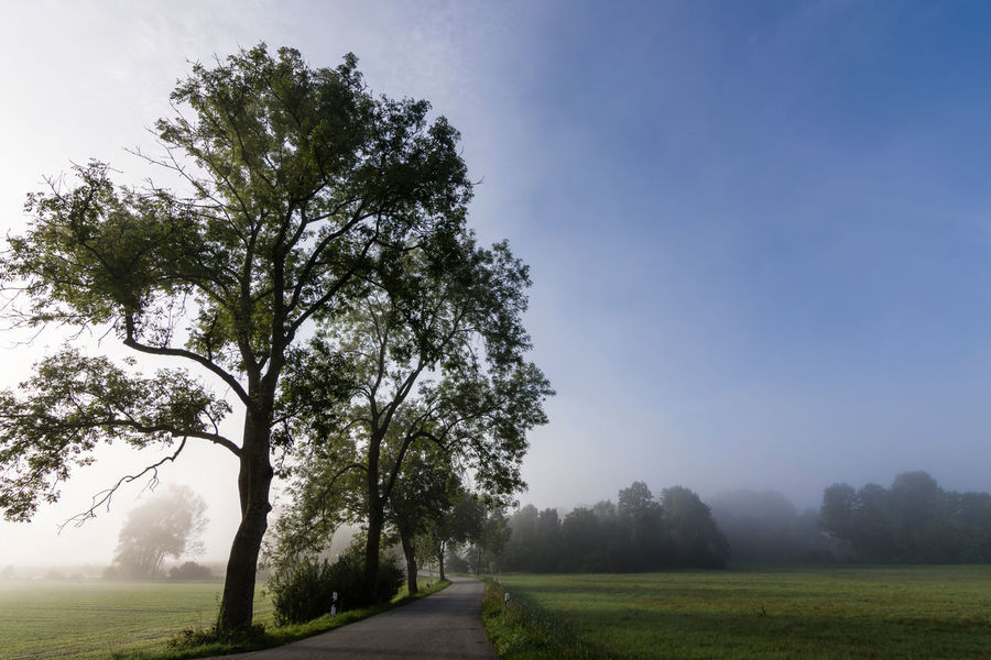 Foggy morning in Bavaria ARTsbyXD EyeEm Best Shots EyeEm Nature Lover Misty Beauty In Nature Clear Sky Day Fog Foggy Grass Growth Landscape Mist Nature No People Outdoors Road Scenics Sky Tranquil Scene Tranquility Tree