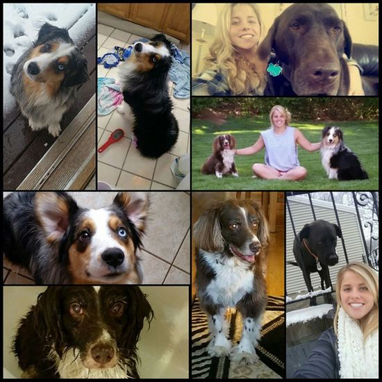 MCM to my pups: Tucker, Toby, Riley, and Caesar Australianshepard Blacklab Springerspaniel Labrador Nationalpuppieday Puppielove Pupsofinstagram Photogrid