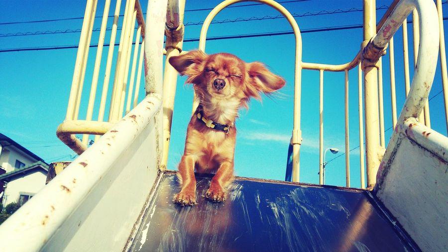 Dog Slide 犬 ひと思いに行こうと 目を閉じる。