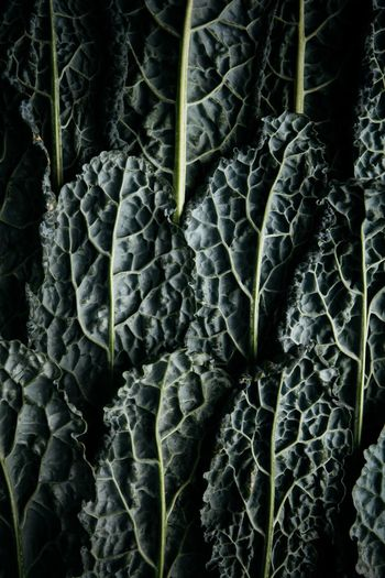 Kale Full Frame