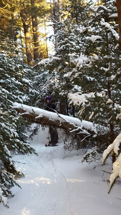 Fallen tree out in the woods on a cold winter day while snowshoeing Taking Photos Winter Enjoying Life Candid Real People Reality Snowshoeing