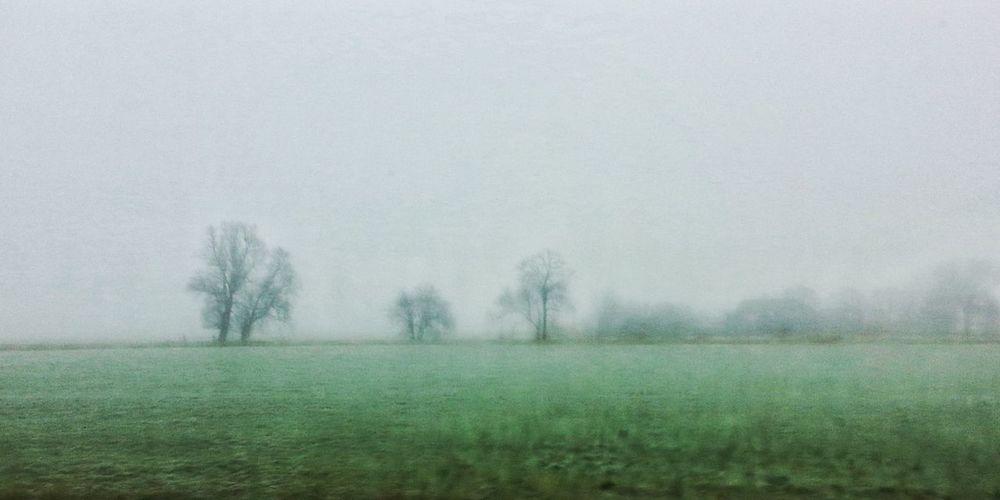 Fog Car View