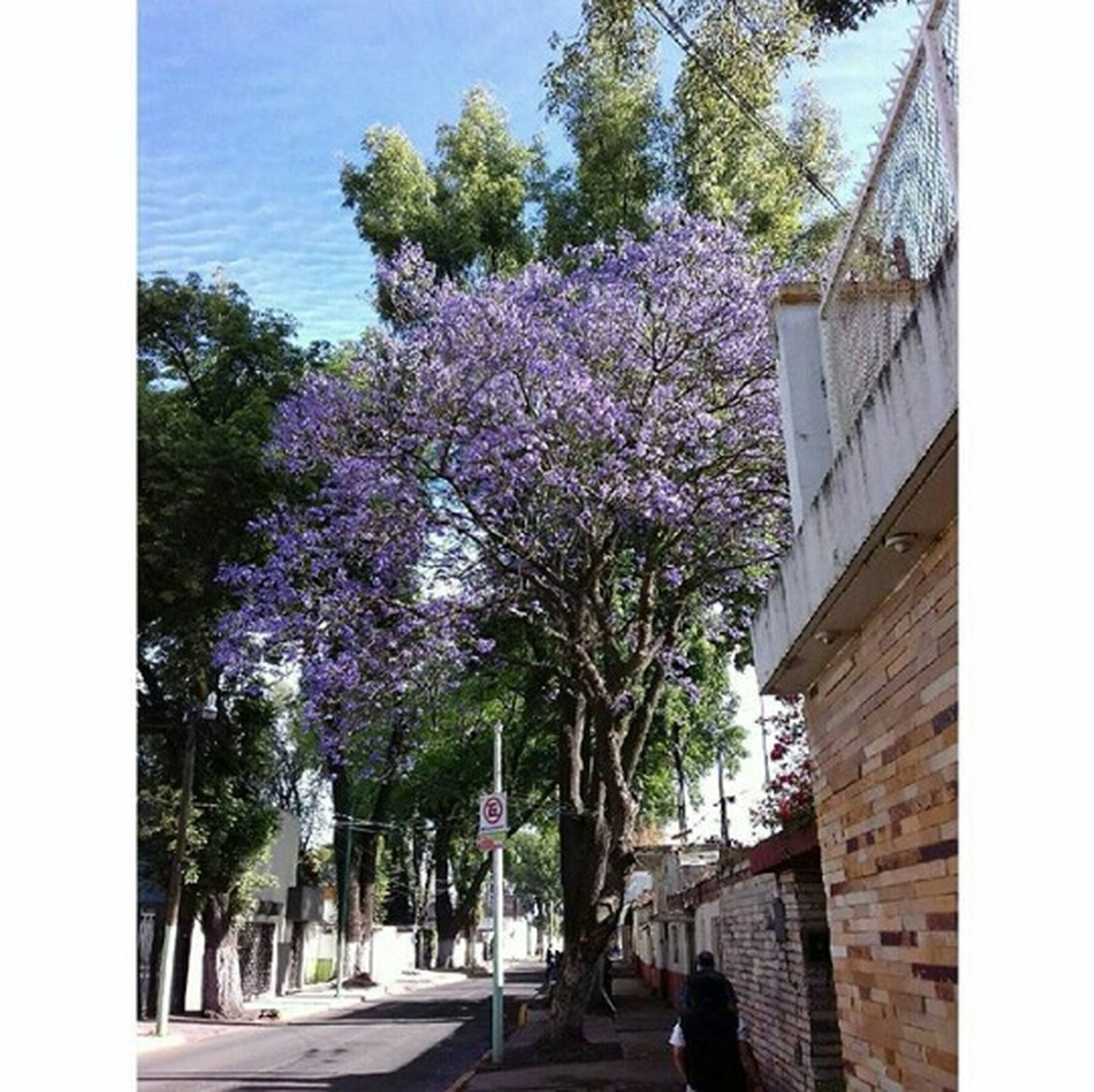 tree, growth, flower, nature, purple, built structure, building exterior, architecture, day, outdoors, no people, sky