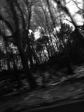 Blackandwhite PhotoByMe Toxxiccandii Toxiccandiiphotography Woods Snow Noir Black And White