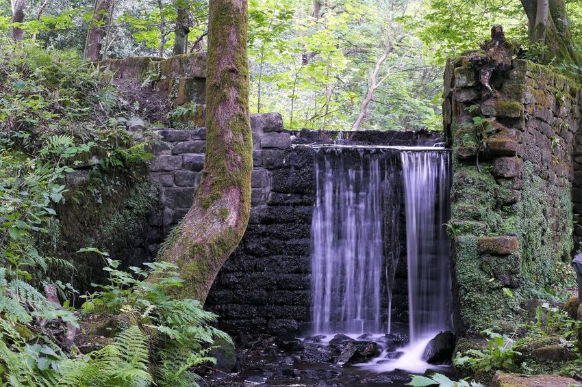 And another from Rivelin Valley 💚😄 Beauty In Nature Tranquility Nature Outdoors Green Color Tranquil Scene For Anyone Whos Interested Check This Out Nature Photography Dayoutwithfriends Long Exposure Waterfall Panasonic DMC FZ1000 The Great Outdoors - 2017 EyeEm Awards Photography Is My Escape From Reality! From My Point Of View Nature_collection Beautiful Rural Scene Motion Panasonic Lumix Water Nature Share-Your-Long-Exposure