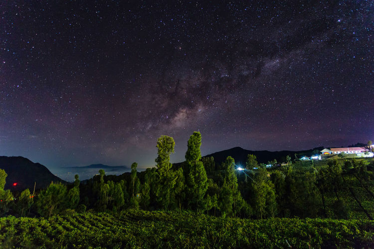 Scenic View Of Trees Against Star Field At Night