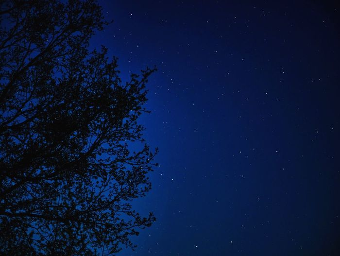 Stars are out tonight Star - Space Night Astronomy Sky Space Blue Tree Beauty In Nature Star Field Scenics - Nature Star Galaxy Nature Space And Astronomy No People