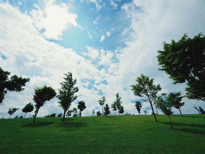 旭川 宮前公園 緑 公園 空 青空 Sky Blue Sky