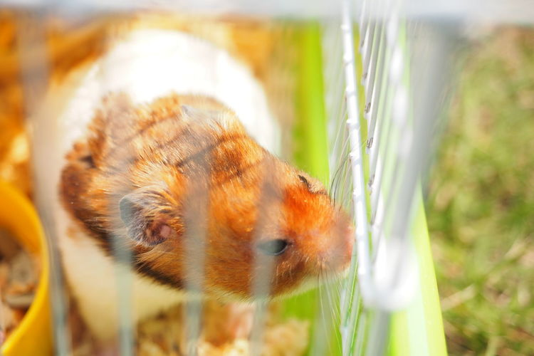 Animal Themes One Animal Animal Mammal Animal Wildlife Vertebrate Pets No People Domestic Rodent Animals In The Wild Close-up Plant Nature Grass Domestic Animals Animal Body Part Selective Focus Focus On Foreground Outdoors Animal Head  Drinking Whisker Cage Cute
