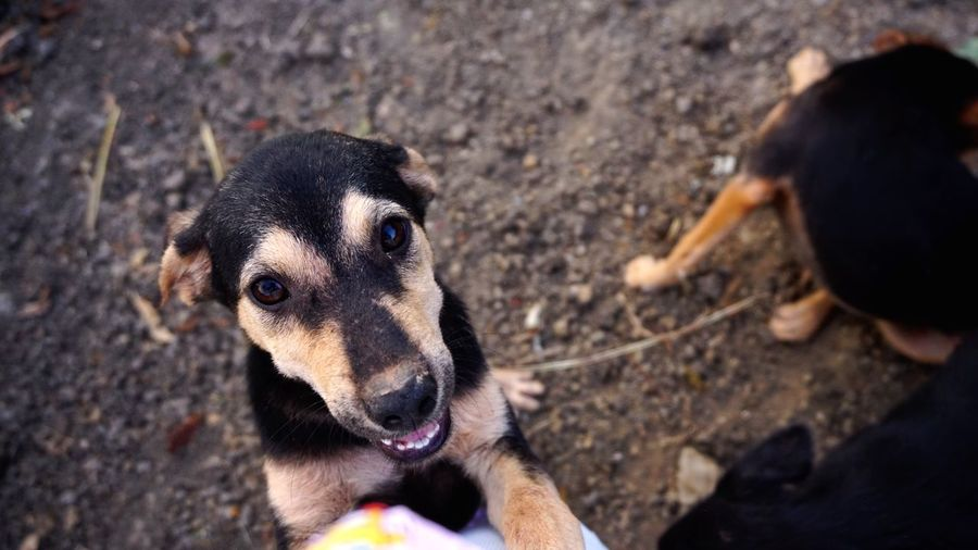 Hi humannn Dog One Animal Animal Themes Pets Domestic Animals Mammal Looking At Camera Outdoors Animal Animals Lovely Puppy