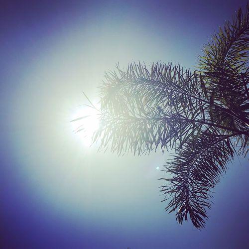 Blueskies Sunshine SundayFunday Relaxing Palmtree Happinessoverload
