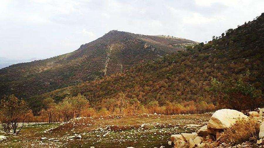 Fall Autumn پاییز Hawler Kurdistan Kurdish Hiranwnazanin Hiran Instakurdish Orangetrees Trees TreePorn Natur Instanature