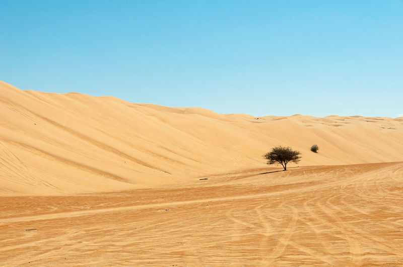 Tree and Desert Arid Climate Barren Beauty In Nature Clear Sky Desert Hill Horizon Over Land Idyllic Landscape Nature No People Non-urban Scene Oman One Tree Outdoors Physical Geography Scenics Solitude Tranquil Scene Tranquility Travel Destinations Tree