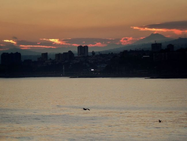 Have a happy week my dear friends 😊 Morning Sunrise Sunrise Porn Sunriselovers Sunrise Fire Sunrise_Collection Sunrise Silhouette Sunrise - Dawn Silouette & Sky Mountain Range Seagulls In Flight Bay Of Valparaiso From My Office Window Valparaiso, Chile