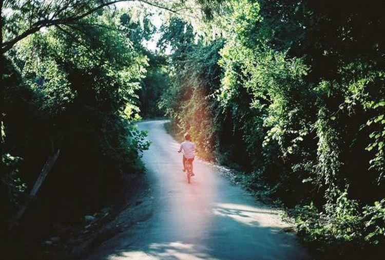 Bike Green Nature Green Trees