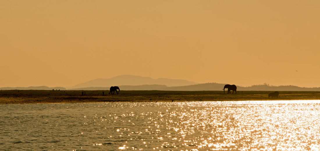 Beauty In Nature Elephants Lake Kariba Landscape Nature No People Outdoors Scenics Silhouette Sunset Travel Destinations Water Zimbabwe Miles Away