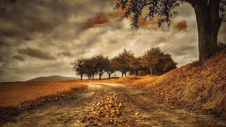 Tree Nature Landscape Cloud - Sky Outdoors No People Beauty In Nature Scenics Mystical Atmosphere Apple Tree Autumn Fuji Xpro2 Countryside Melancholic Landscapes A Photo Like A Painting Austria Tree Tranquil Scene
