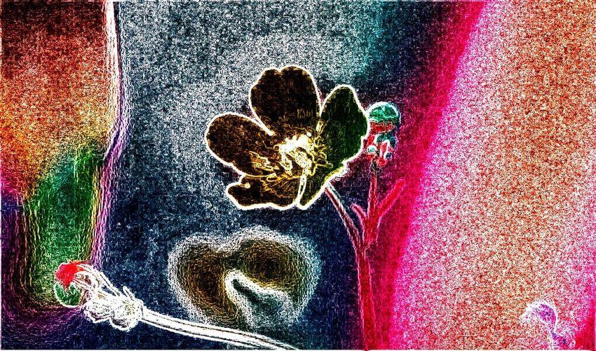 Edited by a Dear Friend Friendly Collab Flowers For My Friends NEM Painterly NEM GoodKarma