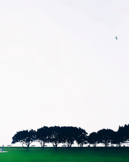 HuaweiP9 Mobilephotography Mobile Photography Huaweiphotography Minimalism Minimalobsession Minimalistic Minimal Portsmouth Uk Tree TreePorn Bird Animal Wildlife Animals In The Wild Animal Animal Themes One Animal Mammal Bird