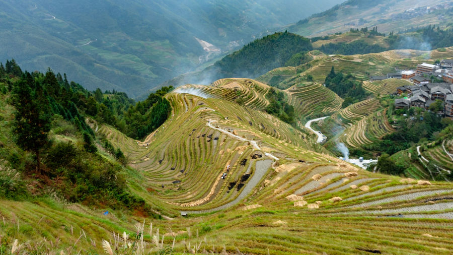 Longsheng & Rice Fields, China. Environment Scenics - Nature Landscape Mountain Beauty In Nature Plant Tranquil Scene Tranquility Tree Non-urban Scene No People Nature Day Land Growth Mountain Range High Angle View Green Color Road Terraced Field Outdoors Longsheng Longsheng-China Longsheng Longji Rice Terrace Rice Terraces