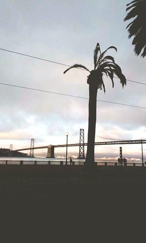 San Francisco Palm Trees Golden Gate Bridge Bay Area California Love Road Trip Fun The Street Photographer - 2018 EyeEm Awards
