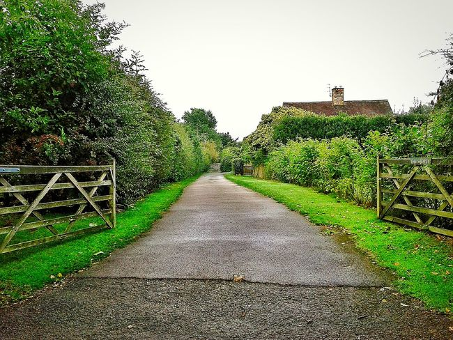 a typical English Countryside Lane. The Way ForwardTreePlantGrowth Tranquil SceneLongTranquility Green ColorGreenWalkwayNarrowDay NatureOutdoorsPathwayFootpath
