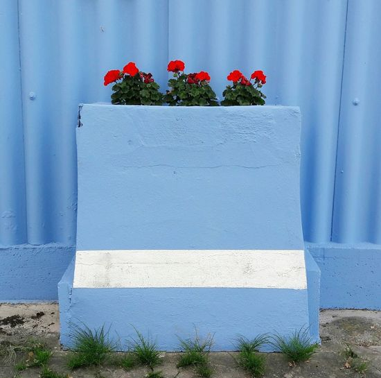 Blue mood - das Letzte... Flower Plant Day Outdoors Blue Facade Architectural Detail Facade Colours Façade Blue No People Architecture Red Red Flowers Gardening Planter Facade Building Patterns Backgrounds Pattern, Texture, Shape And Form Nature Growth Gardenien Streetphotography Shape Copy Space The Week On EyeEm