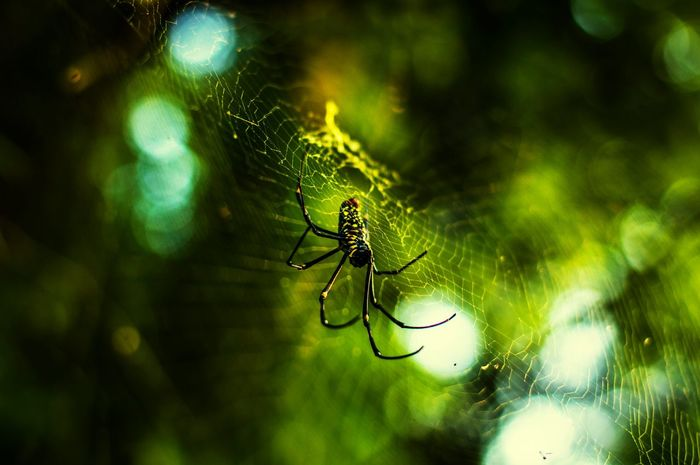Close-up Spider Web Spider Animal Themes Nature Insect One Animal Animals In The Wild No People Beauty In Nature Survival Outdoors Day Web Foest🌳 Naturelovers Naturephotography