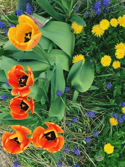 Flower Growth Freshness Plant Orange Color Petal Day Fragility Beauty In Nature Green Color Nature No People Leaf High Angle View Outdoors Flower Head Blooming Yellow Close-up Bird Of Paradise - Plant