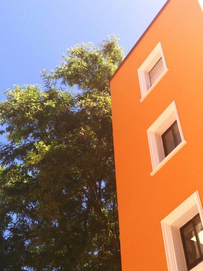 Building Exterior Architecture Window Built Structure Tree Outdoors Façade Low Angle View No People Residential Building Day Sky