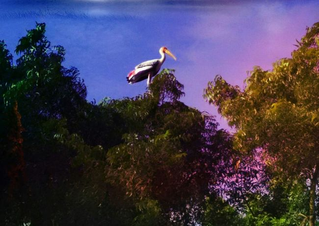 Bird king Bird Animal Wildlife Tree Nature Outdoors Beauty In Nature Evening Sky Nature