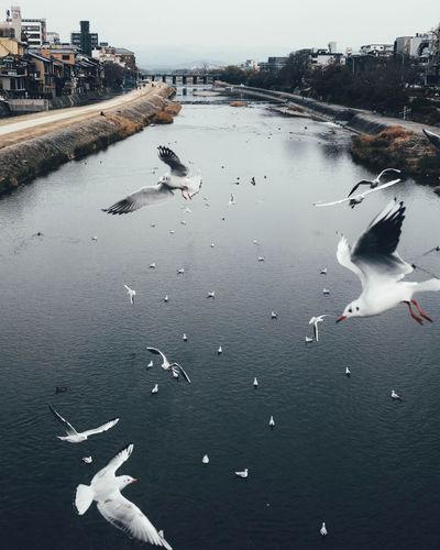 High angle view of seagulls flying over lake