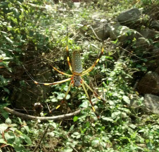 Taking Photos Motog Felipe Carrillo Puerto Streamzoofamily Quintanaroo Natural Beauty Nature