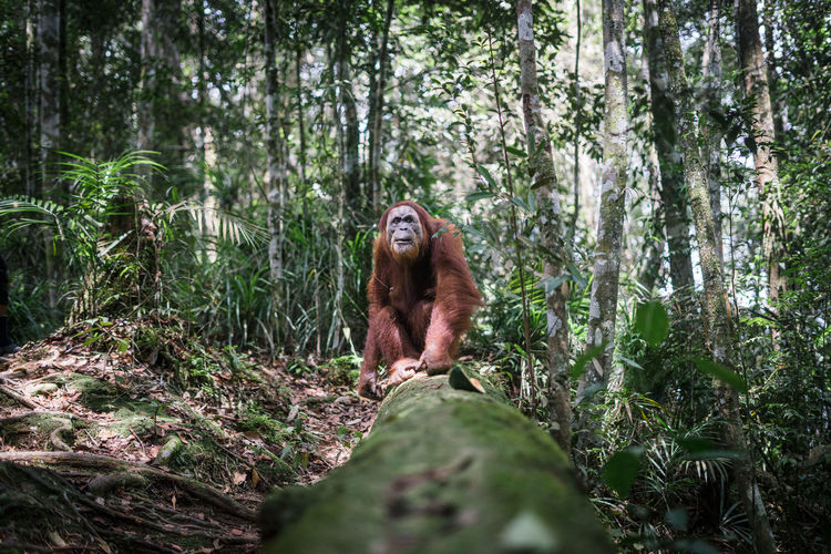 Monkey sitting in forest