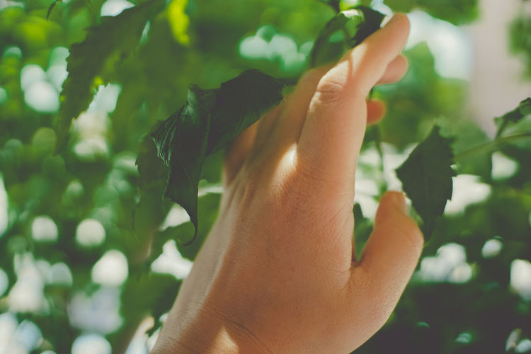 Green in life. Green Color Nature Tree Backgrounds Body Part Day Finger Focus On Foreground Green Color Hand Human Body Part Human Finger Human Hand Human Limb Leaf Leaves Lifestyles Nature One Person Outdoors Personal Perspective Plant Plant Part Real People Unrecognizable Person The Still Life Photographer - 2018 EyeEm Awards