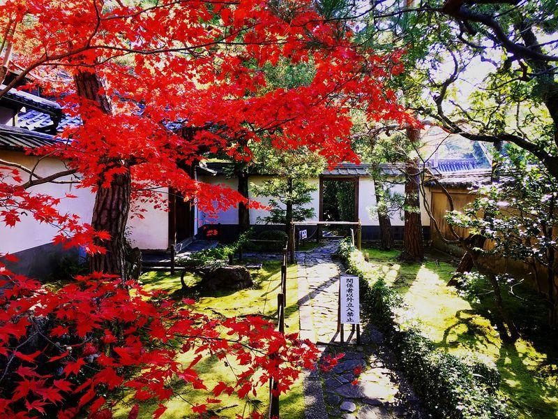 桂春院 妙心寺 京都 Kyoto Kyoto Autumn Autumn Leaves Autumn Colors Japanese Garden Travel Destinations Hello World Enjoying Life Autumn Relaxing Kyototrip Kyoto, Japan