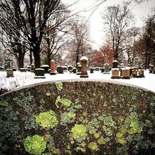 Foresthills ForestHillsCemetery JamaicaPlain Cemetery Ohsoquiet