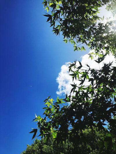 Blue Sky Cloud 90degrees View Tree Growth Low Angle View Nature Sky Leaf Blue Branch Beauty In Nature Day No People Sunlight Freshness Outdoors