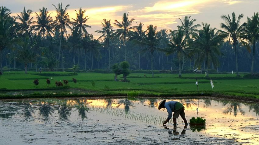 Bali Bali Ubud Ricefields Jeanmart Bali 16:9 Verybalitrip Very Bali Trip