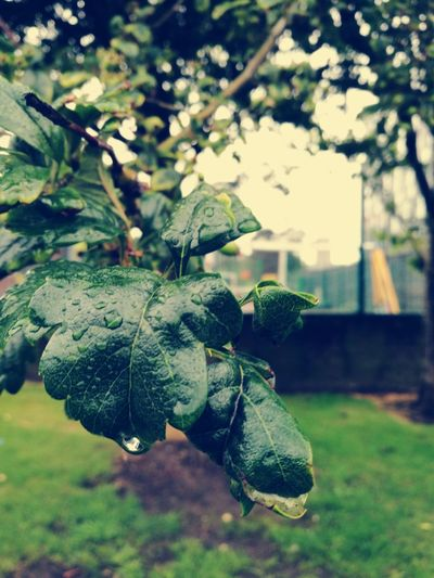 Close-up Focus On Foreground Fragility No People Outdoors Freshness Green Color Plant Day Rainy Days☔ Rain Waterdrops