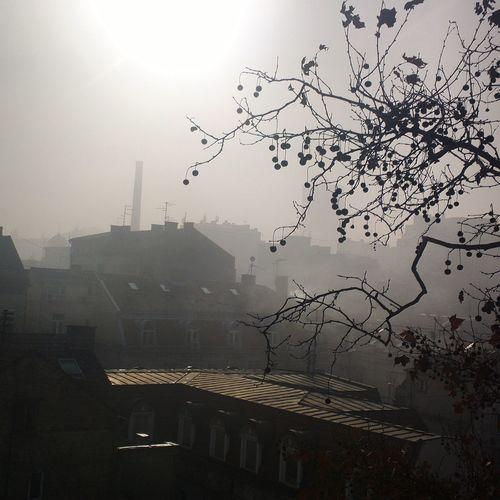 Beograd Belgrade Serbia Fog Day