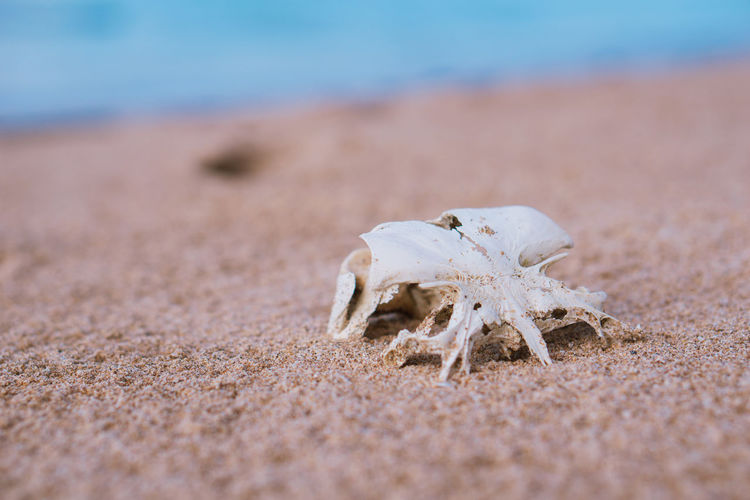 Close-up of a animal on sand