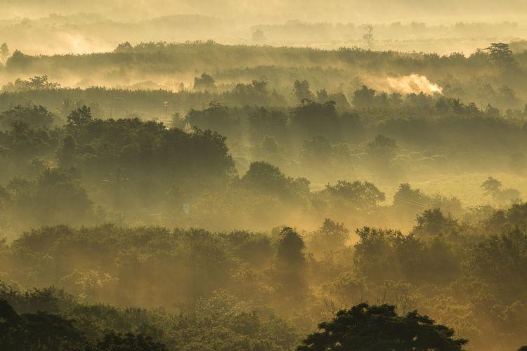 Trees on landscape during sunset